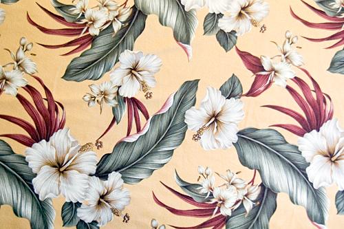 Hibiscus Antique Yellow <完売>