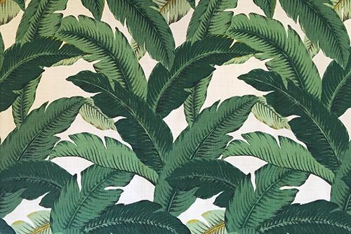 Swaying Palms Aloe