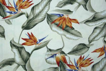 Bird Beige